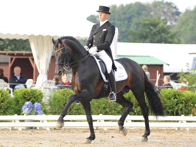 Dressage Royal - Ritual - Grande
